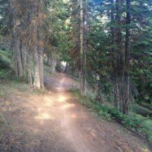 crest-trail