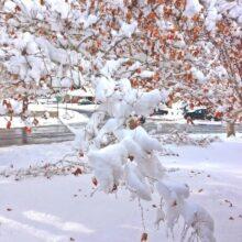 snow-november