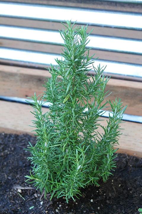 Raised-Herb-Garden-12