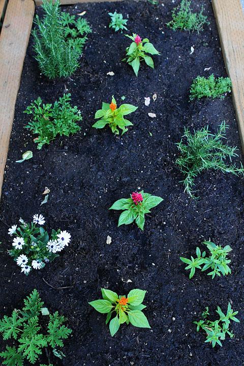 Raised-Herb-Garden-7