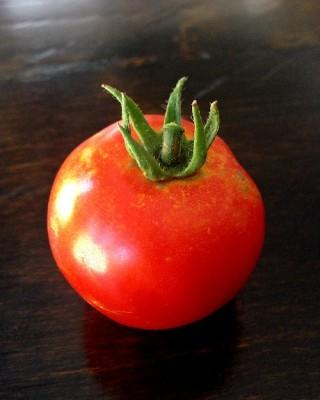 garden-tomato