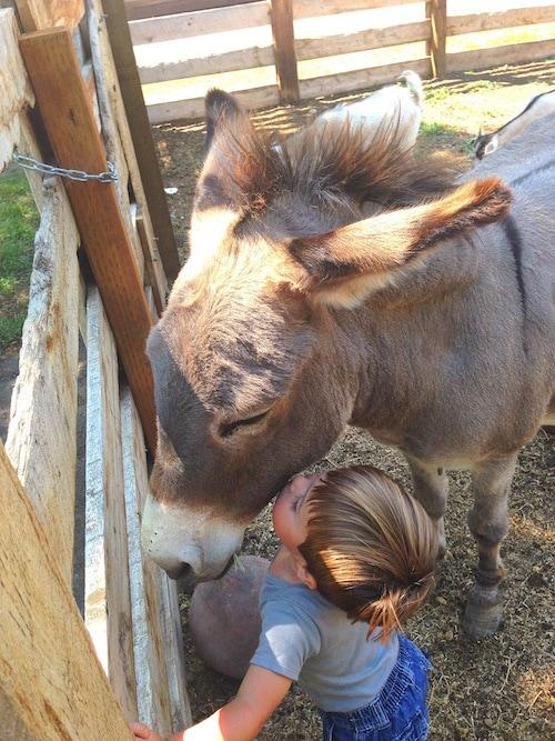 donkey-kiss