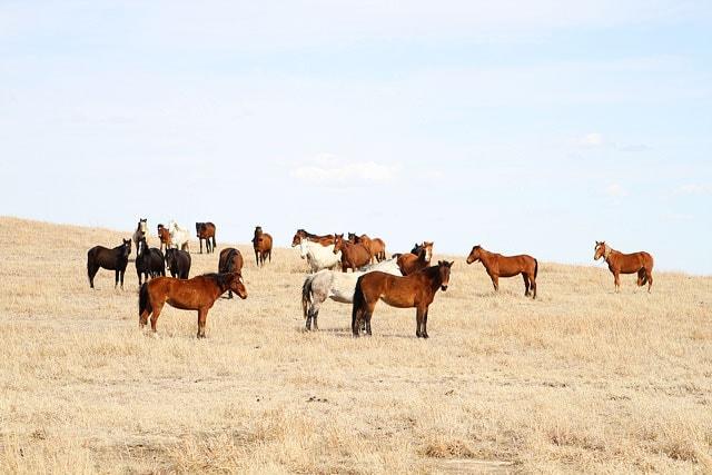 Pioneer-Woman-Ranch-10