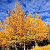 deer-valley-fall