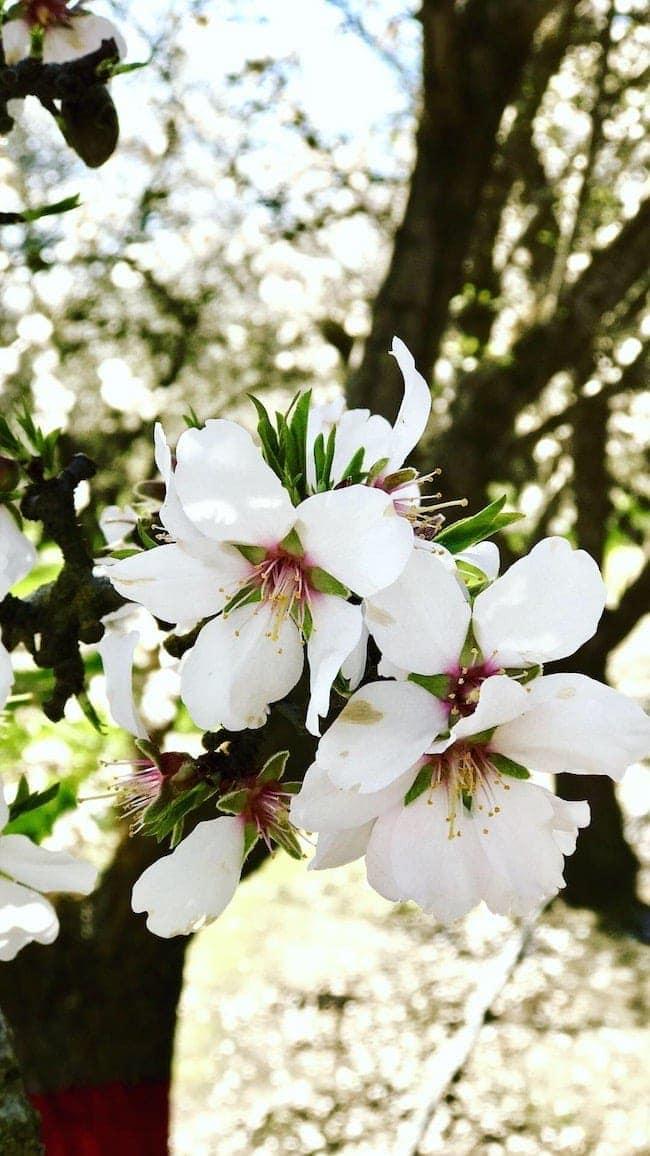 Almond Orchard Tour